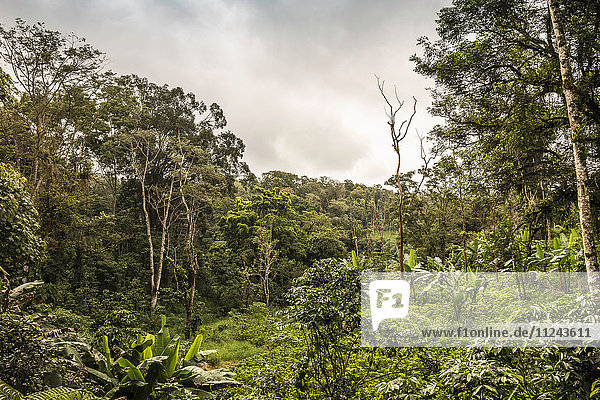 Blick auf den grünen Regenwald  Wana Giri  Bali  Indonesien
