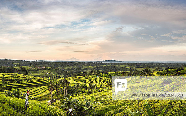Erhöhte Ansicht der Reisterrassen von Jatiluwih  Bali  Indonesien