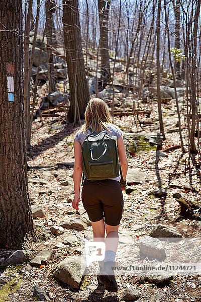 Rear view of woman hiker hiking in forest  Harriman State Park  New York State  USA