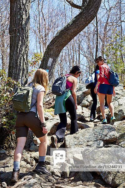 Rückansicht von vier weiblichen Wanderern  die im Wald wandern  Harriman State Park  New York State  USA