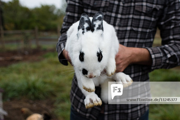 Mittelteil eines Mannes  der ein Kaninchen als Haustier im Garten hält Mittelteil eines Mannes, der ein Kaninchen als Haustier im Garten hält