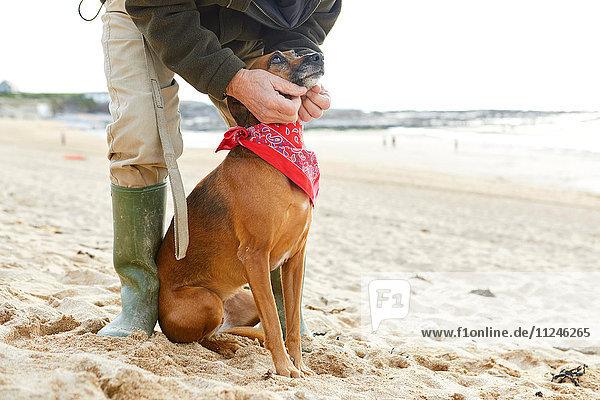 Man and dog on beach  Constantine Bay  Cornwall  UK