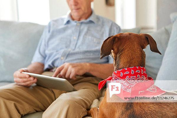 Dog watching owner use digital tablet