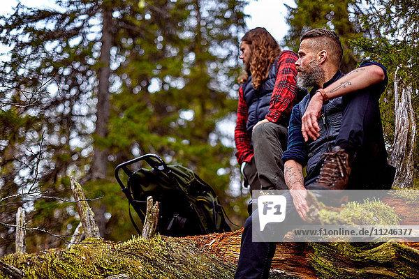 Wanderer ruhen sich auf umgestürztem Baum aus  Sarkitunturi  Lappland  Finnland