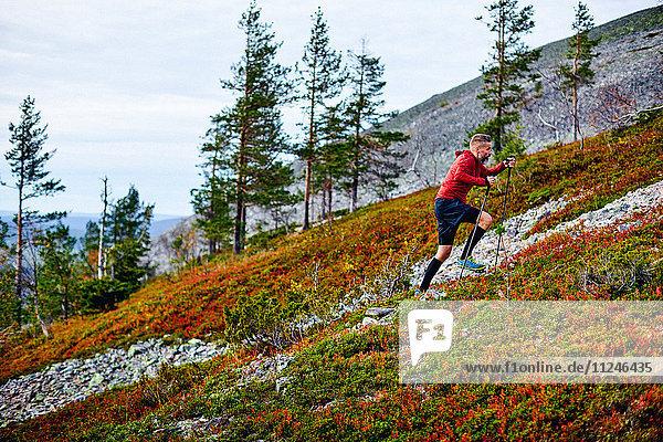 Wanderer beim Aufstieg auf einen steilen Hügel  Kesankitunturi  Lappland  Finnland