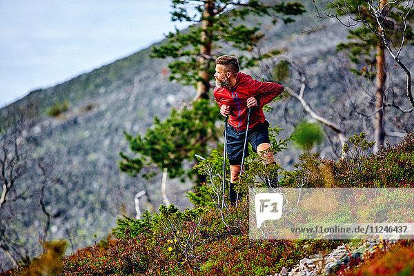 Wanderer im Rückblick auf einen steilen Hügel  Kesankitunturi  Lappland  Finnland