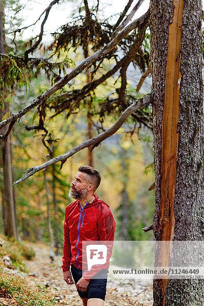 Wanderer rastet am Baum im Wald  Kesankitunturi  Lappland  Finnland