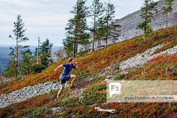 Man running up steep hill  Kesankitunturi  Lapland  Finland