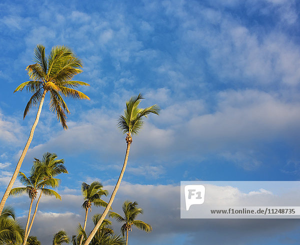 Dominican Republic  Palm trees against cloudy sky
