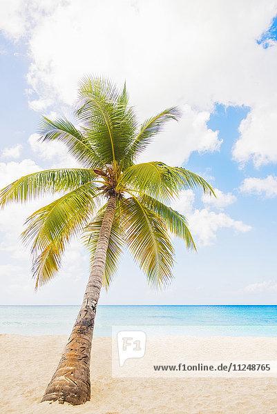 Dominican Republic  Palm tree growing in sandy beach
