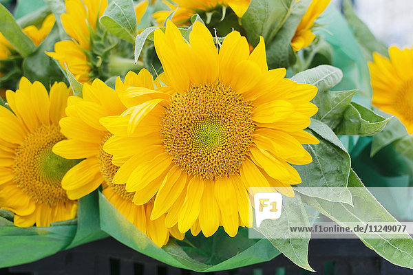 Close up of sunflower head