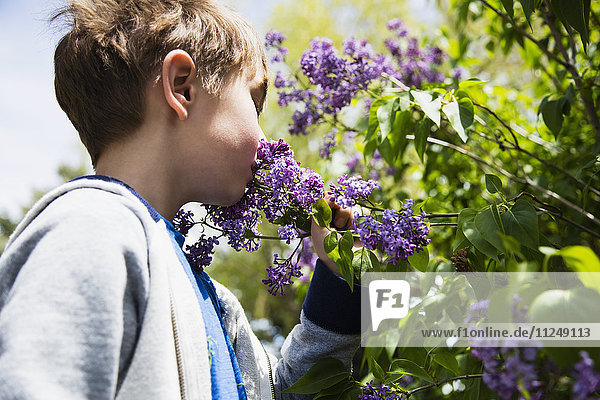 Portrait of boy (6-7) smelling flowers