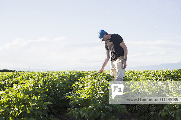Mature man looking at plants in field
