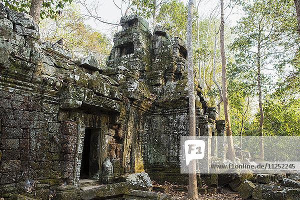 Asia  Cambodia  Siem Reap  Angkor  Ta Nei jungle temple
