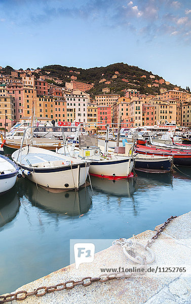 Sunset frames harbour and fishing village of Camogli  Gulf of Paradise  Portofino National Park  Genoa province  Liguria  Italy  Europe