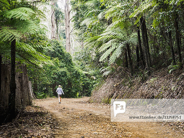 Australia  New South Wales  Port Macquarie  Mature woman walking along dirt road in forest