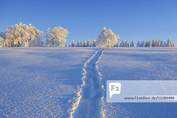 Tracks crossing a pristine snow covered landscape in winter in the Black Forest on Schauinsland near Freiburg in Germany