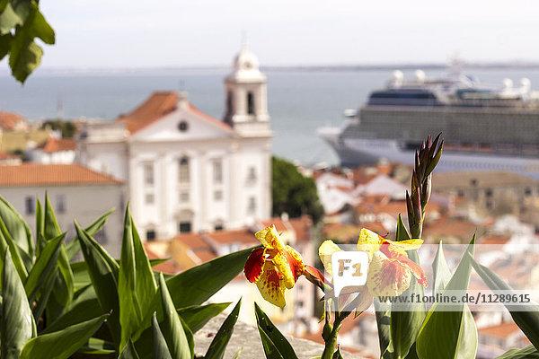 Portugal  Lissabon  Blume vor der Stadt mit Tejo River und Kreuzfahrtschiff im Hintergrund