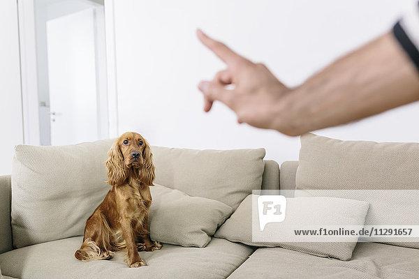 Mann unterrichtet Hund zu Hause