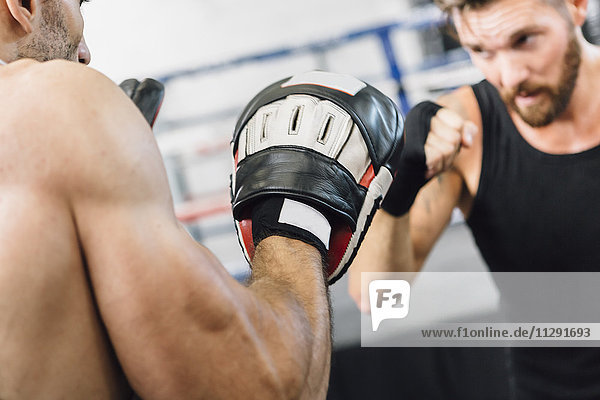 Boxer-Sparring mit Trainer