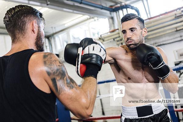 Boxer-Sparring mit Trainer