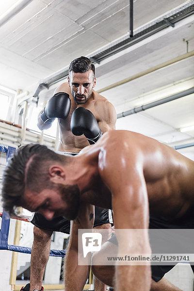 Boxer schlägt Gegner nieder