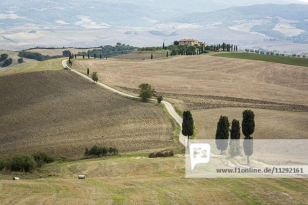 Italien  Toskana  Val d'Orcia  Baumgrenze bei Pienza