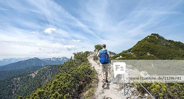Wanderer auf einem Wanderweg  Gratwanderung Herzogstand-Heimgarten  hinten Heimgarten  Oberbayern  Bayern  Deutschland  Europa