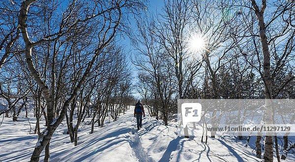 Wanderer auf Weg durch Bäume  Winterlandschaft am See Mývatn  Nordisland  Island  Europa