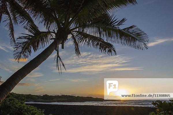 Big Island  palms  Punaluu  Black sand Beach  Big Island  USA  Hawaii  America  sunrise
