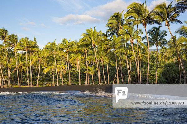 Big Island  palms  Punaluu  Black sand Beach  Big Island  USA  Hawaii  America  palms