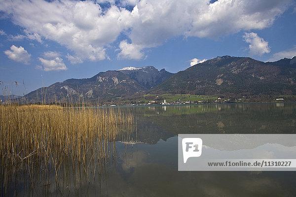 Austria  Upper Austria  Salzkammergut  Wolfgangsee  lake  lake  reed Austria, Upper Austria, Salzkammergut, Wolfgangsee, lake, lake, reed