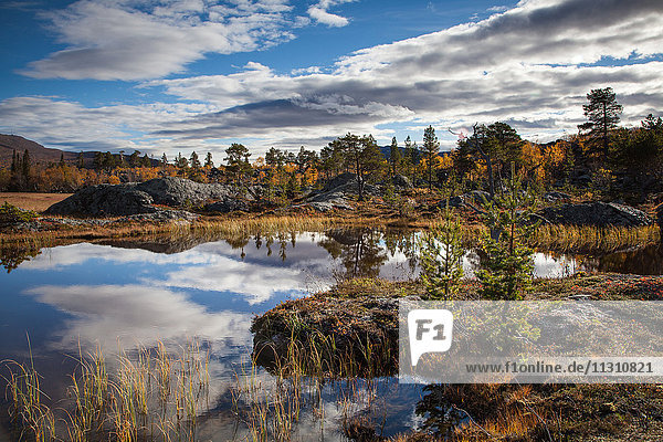 Mountains  trees  Europe  rock  cliff  autumn  autumn colors  scenery  landscape  Lapland  moor  Swede  lake  Scandinavia  reflection  stones  Stora Sjöfallets  national park  marsh  water