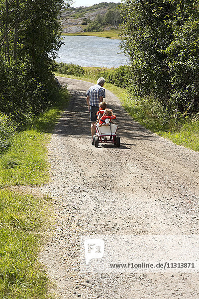 Grandfather pulling children in cart along graveled road  rear view