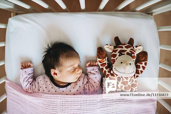 Neugeborenes Mädchen schläft in Krippe mit einer Plüschgiraffe Neugeborenes Mädchen schläft in Krippe mit einer Plüschgiraffe