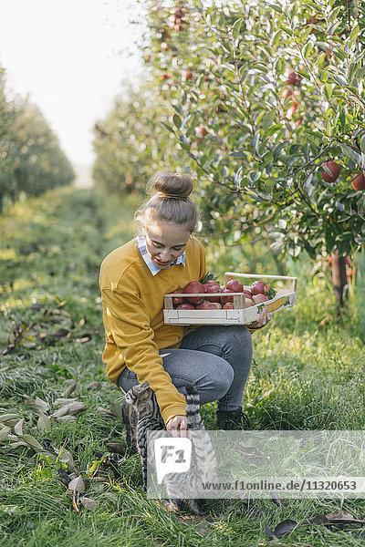 Junge Frau mit Kiste und Katze im Apfelgarten
