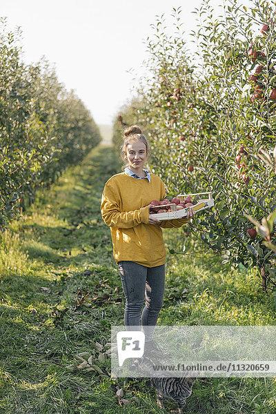Junge Frau hält Kiste mit Äpfeln im Obstgarten