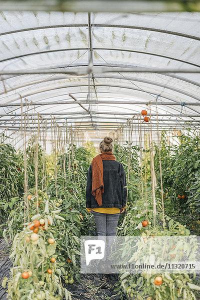 Junge Frau im Gewächshaus mit Tomatenpflanzen
