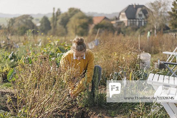 Junge Frau  die im Garten arbeitet