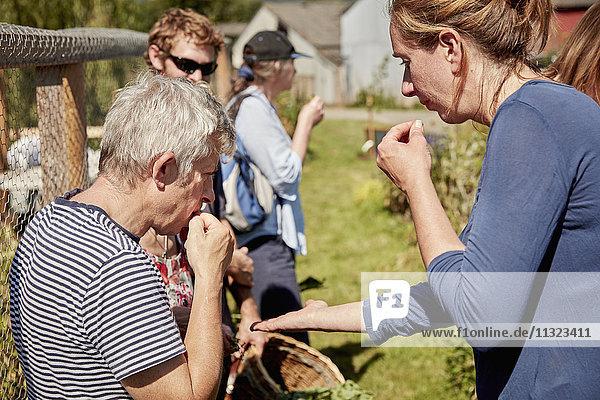 Eine Gruppe von Leuten  die auf dem Futtersuchkurs Samen und Pflanzen probieren.