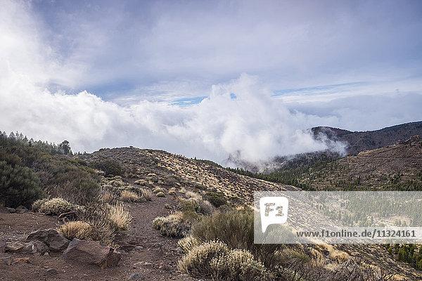 Spanien  Teneriffa  Landschaft im Teide-Nationalpark