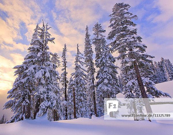 winter landscape in Longmire  Washington State