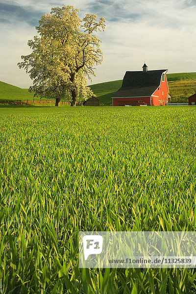 farm in Washington State