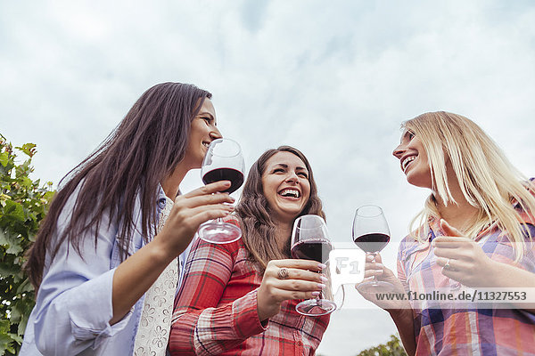 Three happy young women in a vineyard holding glasses of red wine