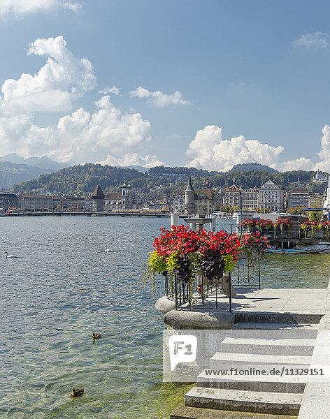 shore and Vierwaldstättersee lake in Lucerne  Switzerland