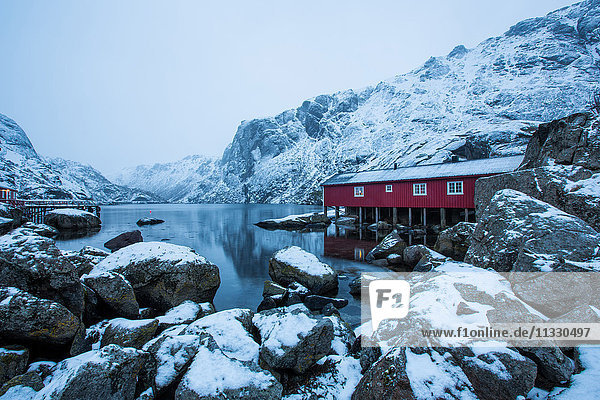 Rorbur in winter in Lofoten  Norway