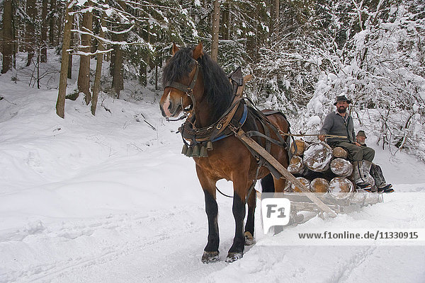 traditional wooden horse sledge in winter in Bavaria