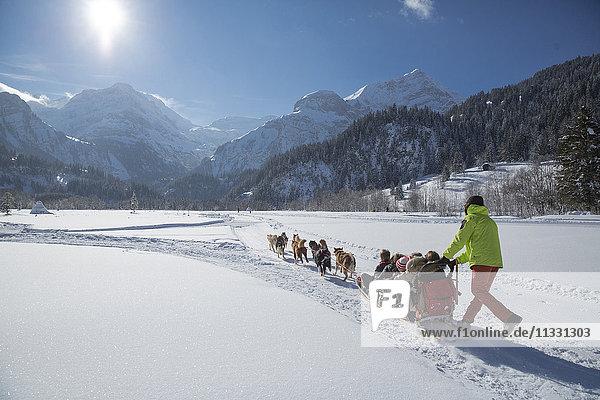 Dog sledges near Lauenen  Switzerland
