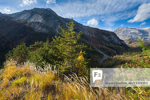 Derborence forest in the canton of Valais