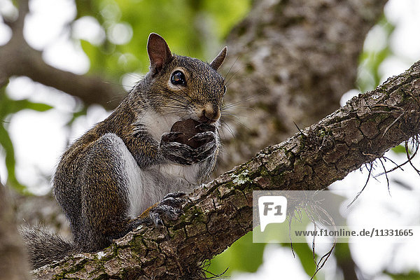 squirrel  tree  animal